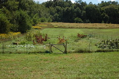 "N&R's Garden Overview <a style=""margin-left:10px; font-size:0.8em;"" href=""http://www.flickr.com/photos/91915217@N00/4994634261/"" target=""_blank"">@flickr</a>"