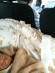 今日のとらちゃん:退院の日。車で妻実家へ。