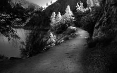 Sierra Trail late light (gcquinn) Tags: california trees light hiking geoff lakes sierra reservoir valley yosemite quinn late weddings wilderness geoffrey madre hetch hetchy