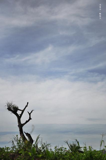 枯樹的藍天