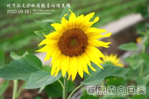 桃園觀音向陽農場20100918-061