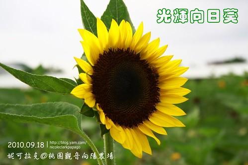 桃園觀音向陽農場20100918-070