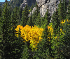 Golden Foliage (Colorado Sands) Tags: autumn trees usa mountains color fall nature colors leaves america forest automne golden us colorado arboles unitedstates branches herbst herfst colores september foliage rockymountains  aspen amerika autunno bume autumnal outono montanhas rvores montagnes fogliedautunno pokok sonbahar efterr autumnale lautomne autunnale bumen montanhasrochosas sandraleidholdt elotoo  coloresotoales leidholdt sandyleidholdt