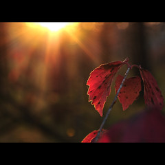 keep your face to the sunshine, and you cannot see the shadows. (anniedaisybaby) Tags: autumn light sunset shadow red reflection home beauty sunshine forest dark leaf backyard quiet country calm clean trail blessed acreage sunstar naturelover keepyoureyesopen damniwishidtakenthat lightpainterssociety faunaandfloragroup magicunicornverybest magicunicornmasterpiece spacetobreathethink