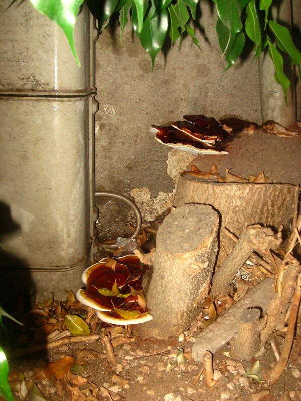 24-09-2010-mushroom