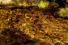 NorthGlenSannoxBurn (Assja) Tags: autumn mountains fall water leaves forest landscape golden scotland highlands rocks stream heather herbst glen hills naturereserve valley bracken rowan isleofarran birches indiansummer birchtree schottland wirbel herbststimmung ruska naturreservat hochland wildbach zauberwald birkenwald farnkraut heidekraut ebereschen torfmoor remarkabletrees feenwald wildpfad thebrackenisgoldinthesun northendofarran subarktischestimmung