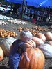 pumpkin 106