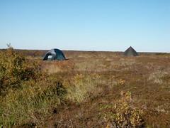 Moose Camp 2010