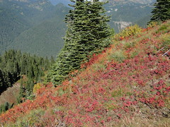 Fall colors near Shriner Peak lookout.