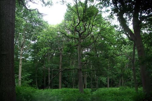 broxbournewoods-main