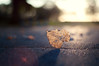 Perseverance. (next_in_line) Tags: light shadow hearts 50mm evening leaf bokeh character wounded flare torn strength f18 standingtall