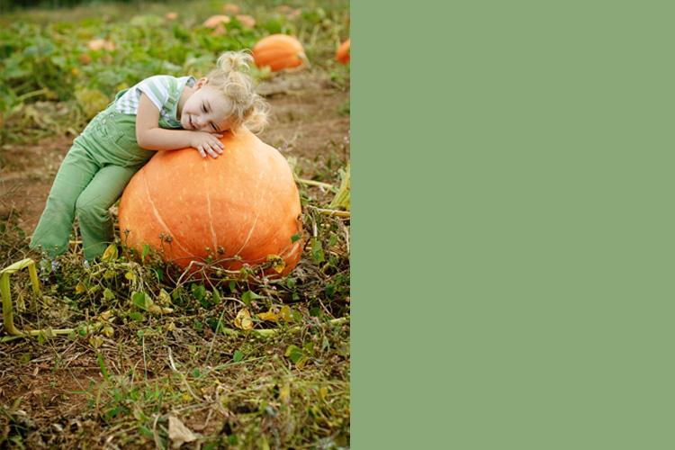 pumpkin1l