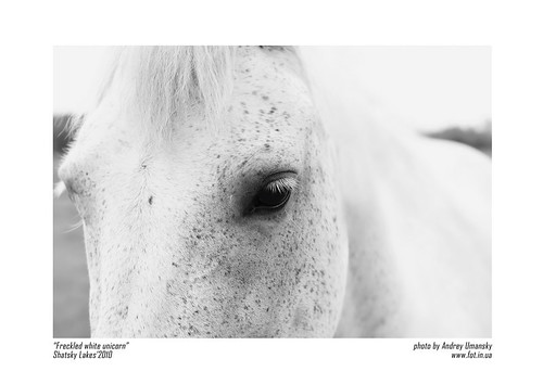 freckled white unicorn