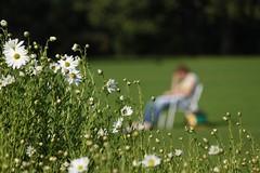 Lesend versunken (Vanilla55555) Tags: lesen herbst hannover stadtpark