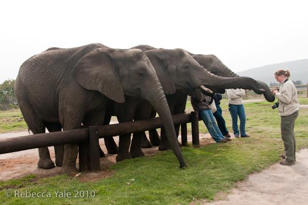 RYALE_Elephant_Sanctuary_15