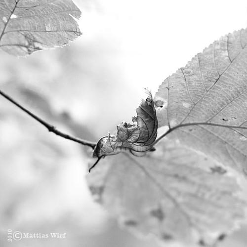 BW autumn