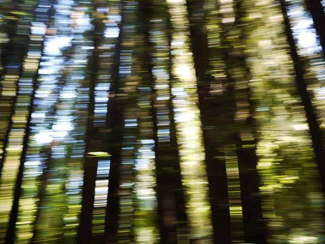 barcode redwoods