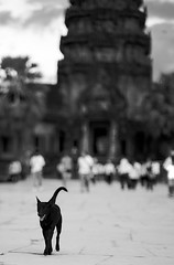 Dog in black (Blursoul) Tags: zeiss canon cambodia oct 85mm ankor angkor wat 1ds 2010 markiii 1635mm