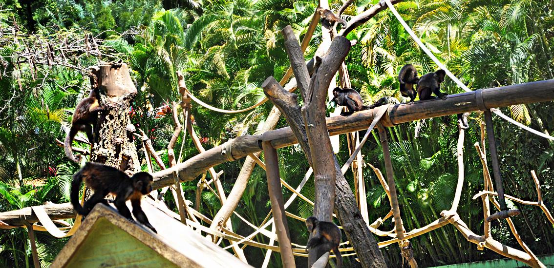 soteropoli.com fotografia fotos de salvador bahia brasil brazil 2010 zoo zoologico by tuniso (24)