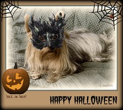 ***Trick or Treat '10 (dagutzyone ) Tags: portrait dog pet game art halloween yorkie nature animal cards photo trickortreat yorkshire canine games puzzle creation card jigsaw greetings puzzles jidsaw dagutzyone