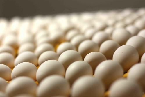 EggTrip7