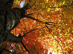 standing under a tree in autumn