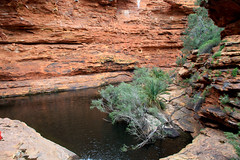 Kings Canyon - Eden Garden