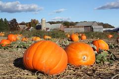 It's Fall (beckstei) Tags: park trees sunset fall halloween field barn rural forest countryside midwest michigan farm pumpkins harvest annarbor utata dexter rurualfoliage