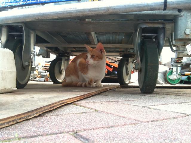 Today's Cat@2010-10-17