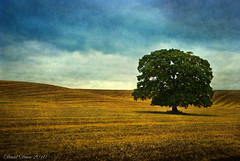 Stranded (jactoll) Tags: tree texture rural landscape countryside oak nikon farmland textures arrow nikkor 1001nights warwickshire vr d60 potofgold warks pareeerica 1685mm darkwood67 redmatrix mygearandmepremium jactoll