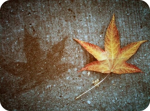 {65::365} sidewalk imprint