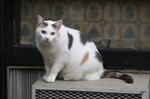 spot cat 5