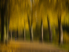 park impression autumn (Mike Ashton) Tags: trees blurry shropshire shrewsbury impression quarrypark