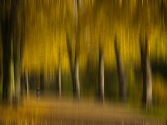 park impression autumn (Mike Ashton) Tags: trees blurry shropshire shrewsbury impression quarrypark
