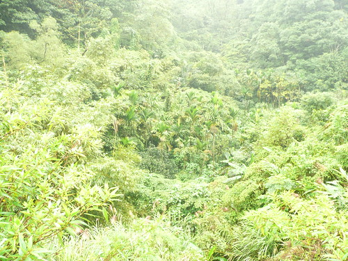 Lush Vegetation on the way to Pingxi