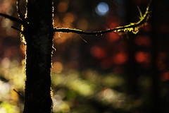 IMG_7970_A_900 (~ Jonathan ~) Tags: light fall luz forest automne canon 50mm switzerland suisse bokeh mark lumire f14 ii 5d floresta fort flou pdc ambiance outomno