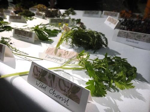 Noma - Rene Redzepi Talk - Foraged Foods 2