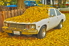 Full Coverage (dlholt) Tags: auto morning autumn white fall chevrolet nova leaves car yellow gold golden washington leaf gm automotive chevy vehicle coupe generalmotors 2door worldcars