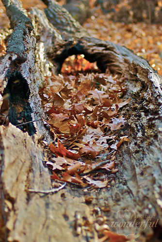 Leaves_Log