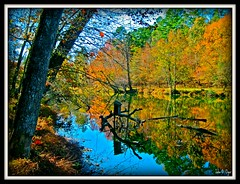 Bird House - Eno River, Durham, NC (John O Dyer) Tags: statepark autumn reflection fall birdhouse eno enoriver