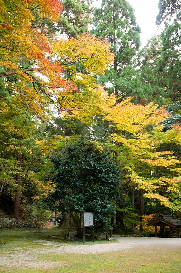 紅葉|百斉寺