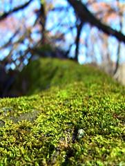 Off the beaten path (GoldilocksCG) Tags: wood november blue sky white tree green leaves canon illinois moss cg feather volo fallen goldilocks bog deadwood picnik s10 2010 hf volobog vixia hfs10 canonvixiahfs10 cassandragordon goldilockscg goldilocks777