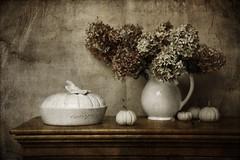 ... (..Ania.) Tags: life flowers stilllife still pumpkins jug hydrangea bouquet textured whiepumpkins