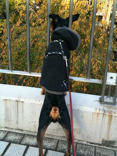 黒犬王子は警備に余念がありませんw