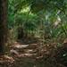 Paths of Ah Pek San
