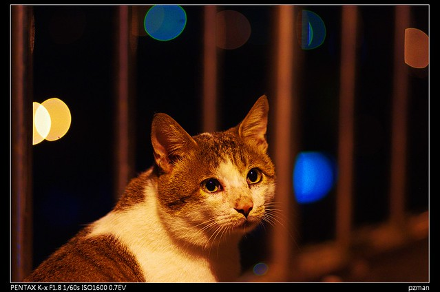 侯硐 x 夜貓 x k-x+ Fa77(這回無正負沖)