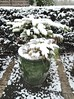 Evegreen Container in Snow