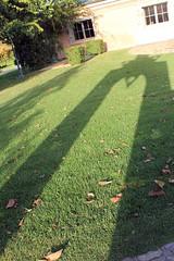 Balanced Shadow (JB by the Sea) Tags: california shadow vineyard winery napavalley winecountry rutherford pejuprovincewinery november2010 phillipdizick