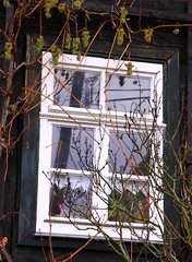 Advent decoration that puzzled me!!! (:Linda:) Tags: winter flower reflection window fruit germany town village wine vine thuringia climber grape climbingplant obst weinrebe kletterpflanze hildburghausen hselrieth reflectiononwindowpane