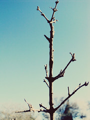 Quiere volver a mostrarse. (Franco Rostan   Fotografa) Tags: new light sunset red summer naturaleza sun white color macro tree green art textura luz nature argentina colors yellow photography photo spring google nikon raw day foto tour photos earth top live sony cybershot colores nov30 explore vida cielo desenfoque reflejo contraste campo perspectiva jpg 365 geo da nueva mundo placer fotgrafo rama franco 2010 lapampa fotografa planeta encuadre enfoque despejado degrades nitidez explored rostan i365 ntido dsc2100 francorostan geoticacion